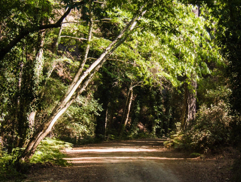 Best Pram for Off Road Adventures